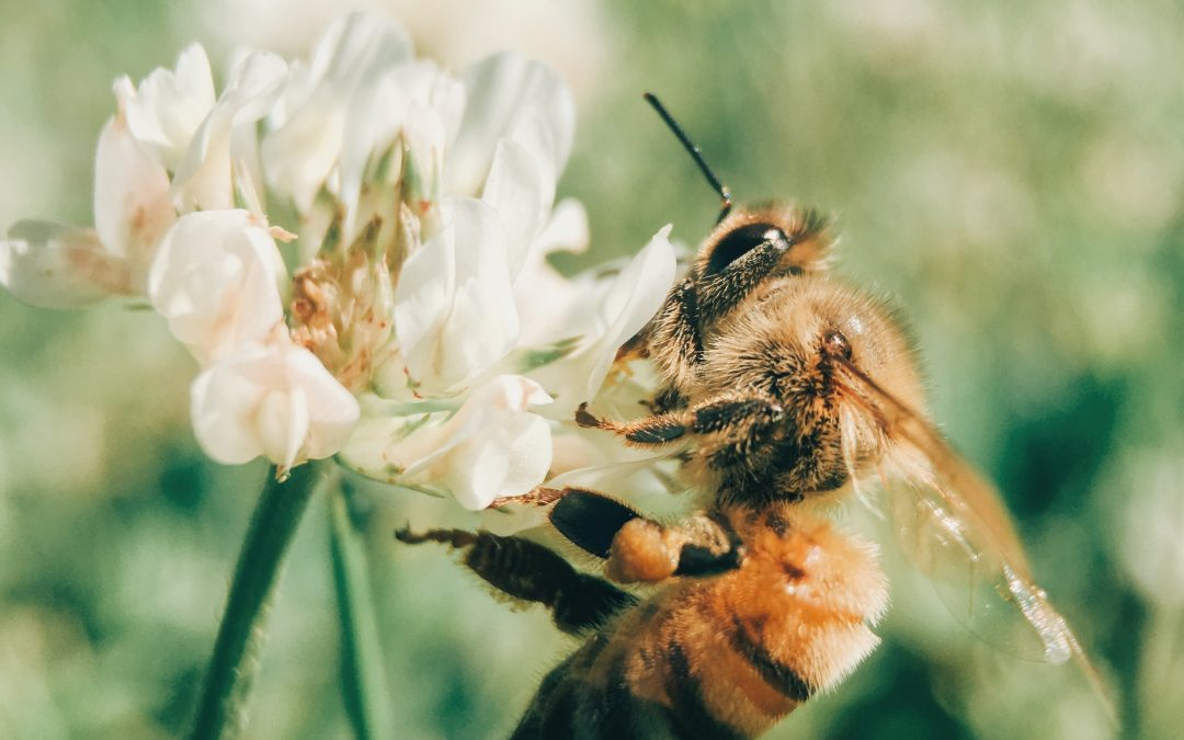 Helping the bees